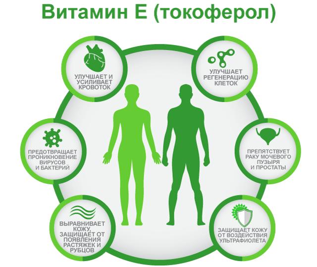 Польза витамина Е, Токоферол