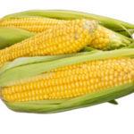 Кукуруза польза и вред для здоровья человека