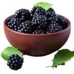 Ежевика польза и вред для здоровья организма человека