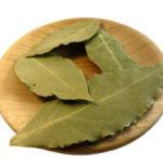 Лавровый лист польза вред и лечебные свойства
