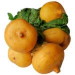 Репа польза и вред для здоровья организма