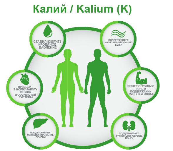 Калий (K) в организме ифографика