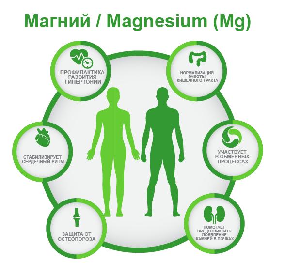 Магний Magnesium (Mg) ифографика
