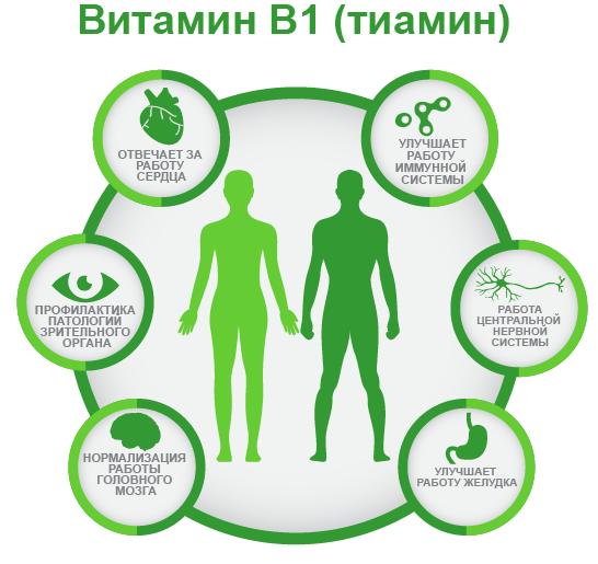 витамин B1 ифографика