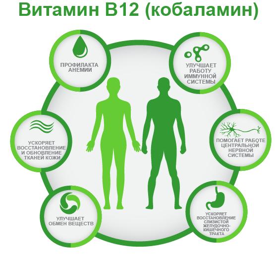 витамин B12 ифографика