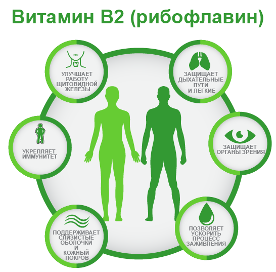 витамин B2 ифографика