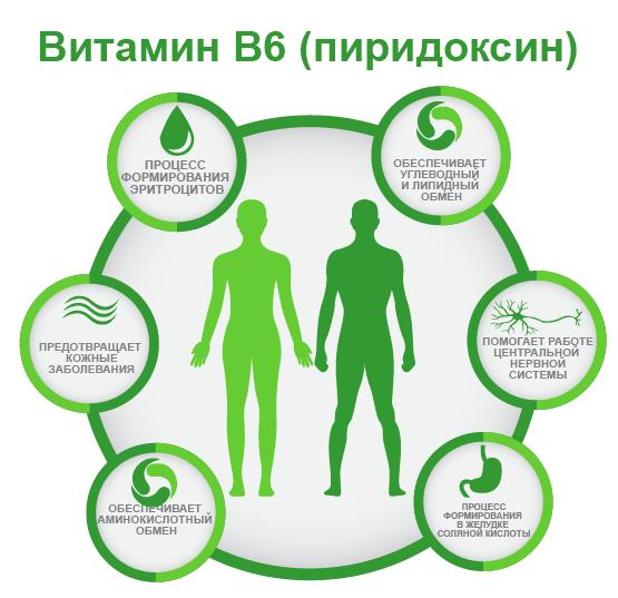 витамин B6 ифографика