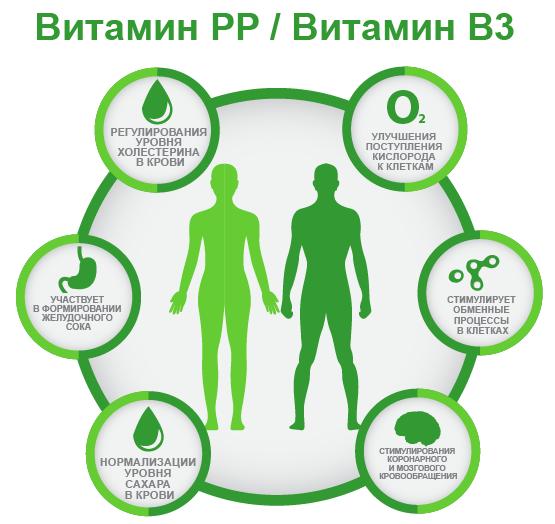 витамин PP B3 ифографика